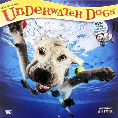 A Splendid Splash - Underwater Dogs