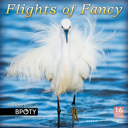Bird Photographer Of The Year - Flights Of Fancy
