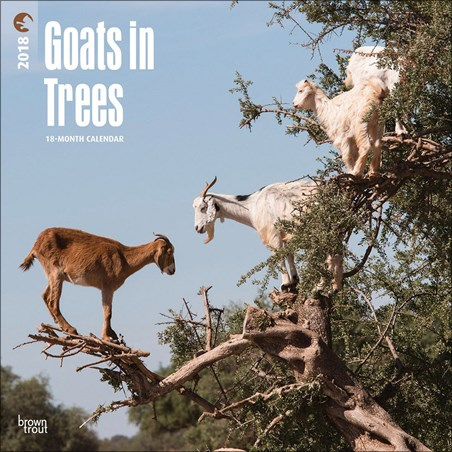 Goats in Trees - Nature Photography