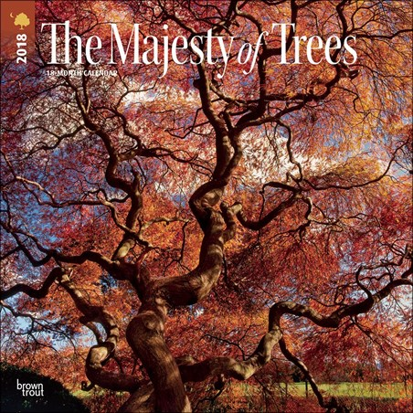 Beauty of Nature - The Majesty of Trees
