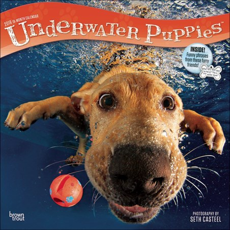 Doggy Paddle - Underwater Puppies