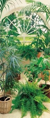 La Serre - The Greenhouse