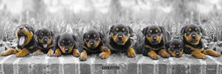 Eight Cheeky Pups - Keith Kimberlin