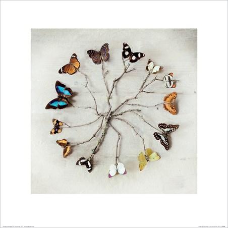 Butterfly Harmony - Ian Winstanley