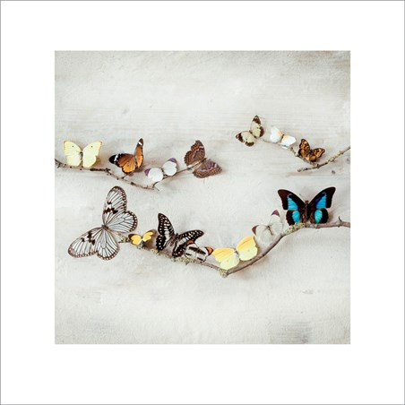 Array of Butterflies - Ian Winstanley