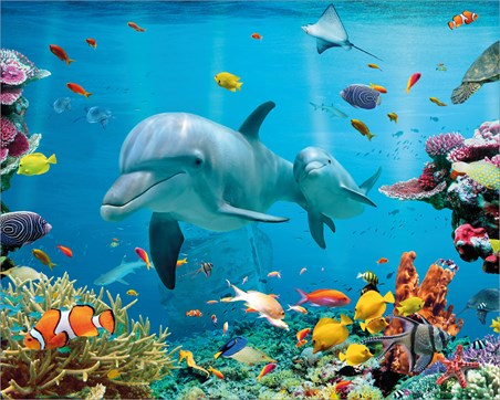 Tropical Ocean - Sea Creatures