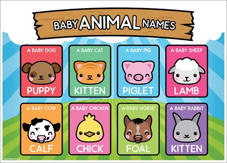 Baby Animal Names - Learning Is Fun