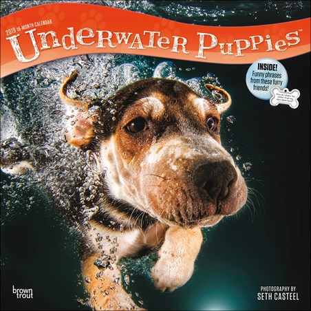 Paddling Pooches! - Underwater Puppies