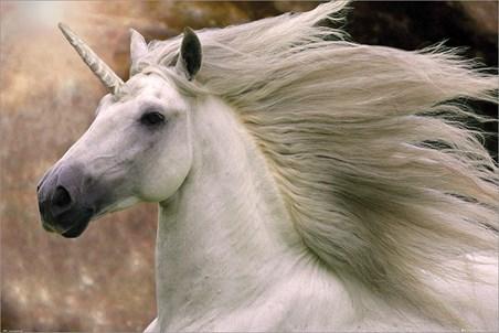Unicorn - Bob Langrish
