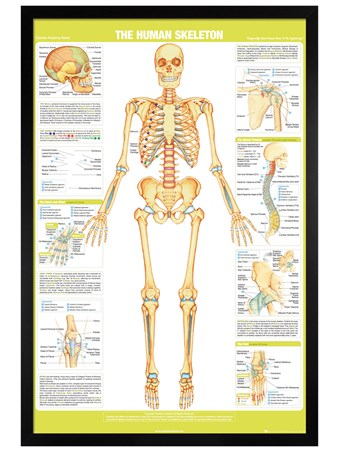 Black Wooden Framed Skeleton - Chartex
