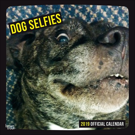 Picture Perfect Pooches - Dog Selfies