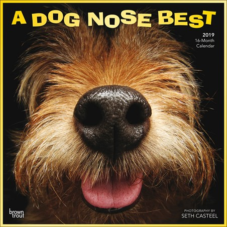 A Dog Nose Best - Seth Casteel