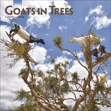 Scaling Billy Goats - Goats in Trees