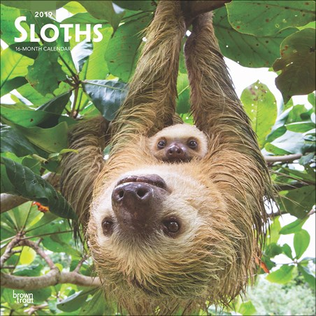 Sloths - Sleepy Smiles