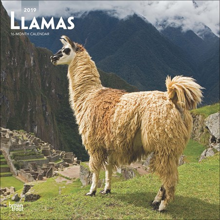 A Whole Llama Love - Llamas