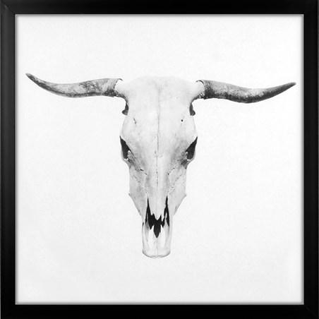 Bos Taurus - Bull Skull