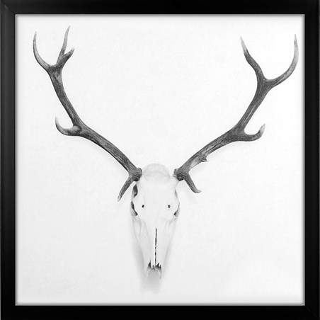 King Of The Forest - Stag Skull