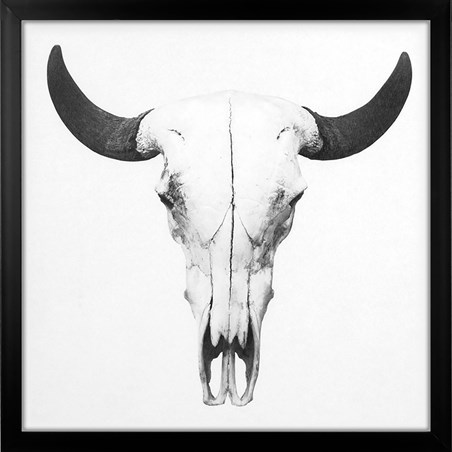 Bison Skull - Animal Graveyard