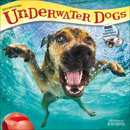 Paws Paddling - Underwater Dogs