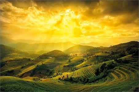 Rice Fields Of Yên Bái, Mountain Masterpiece