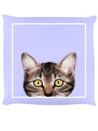 Cute Kitten - Inquisitive Creatures