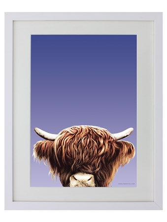 Highland Cow - Inquisitive Creatures