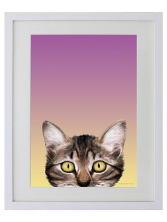 Kitten - Inquisitive Creatures