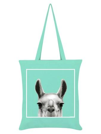 Llama - Inquisitive Creatures
