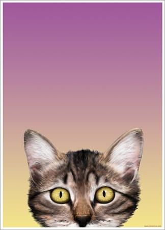 Kitten Eyes - Inquisitive Creatures