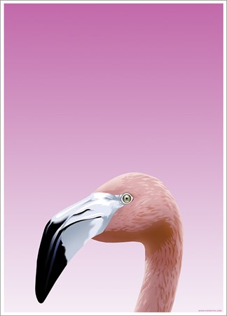 Flamboyant Flamingo - Inquisitive Creatures