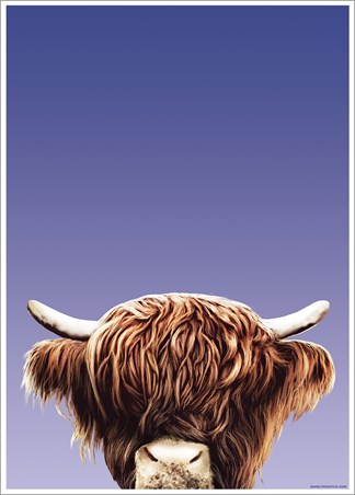 Hairy Highland - Inquisitive Creatures