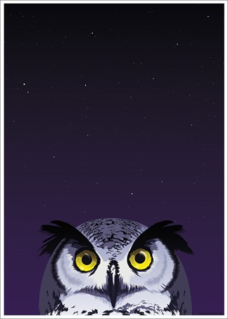 Wide-Eyed Owl - Inquisitive Creatures