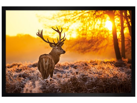Black Wooden Framed Golden Stag - Wildlife Wonders of The Sunrise