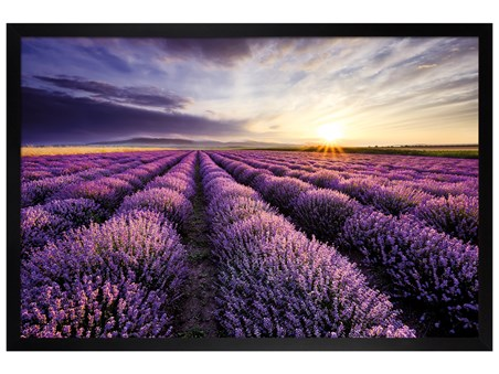 Black Wooden Framed Lavender Field - Purple Sunset