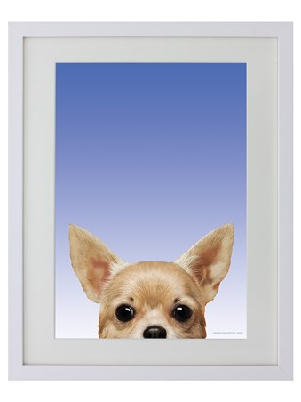 Ooh Chihuahua! - Inquisitive Creatures