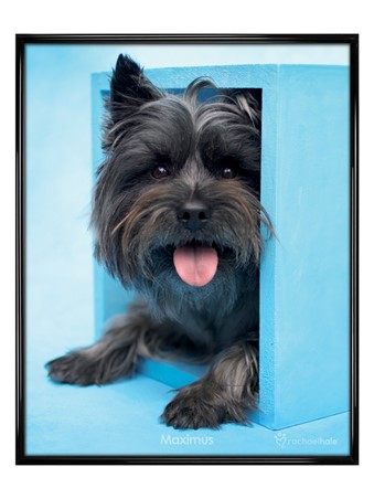 Gloss Black Framed Maximus the Puppy - Cute Pooch