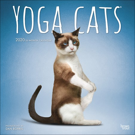 Purrrfect Pose - Yoga Cats