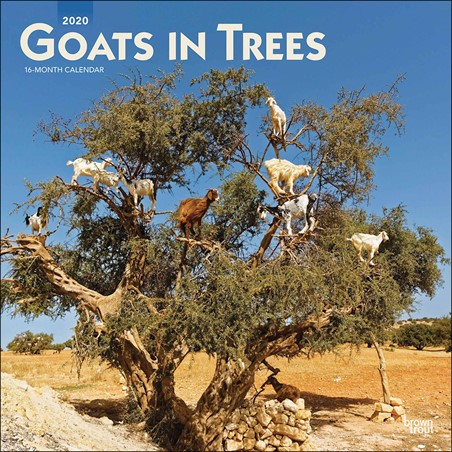 You Have Goat To Be Kidding Me! - Goats in Trees