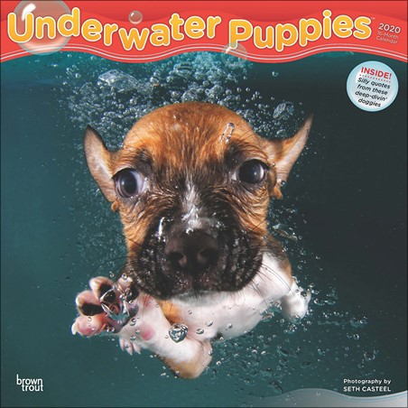 Underwater Puppies -