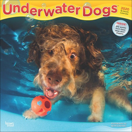 Water Waggles - Underwater Dogs
