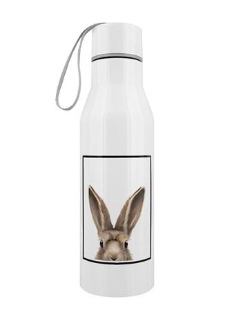 Hare - Inquisitive Creatures