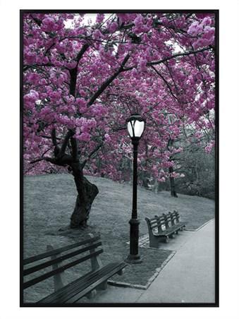 Framed Gloss Black Framed Blossom in Central Park - New York City
