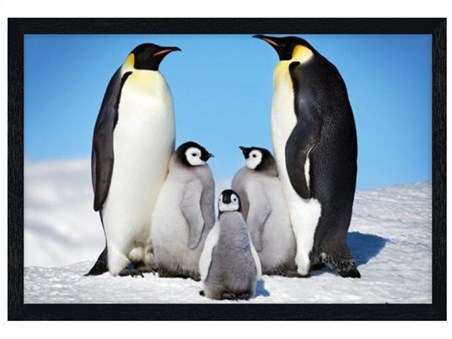 Framed Black Wooden Framed Penguin Harmony - Penguin Family