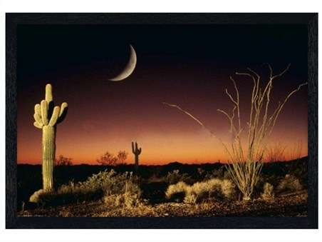 Black Wooden Framed Desert Silhouette -