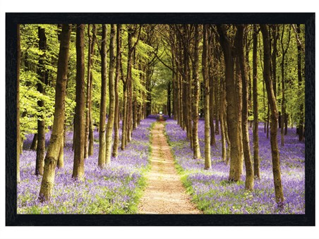 Black Wooden Framed Woodland Path - Bluebells in Bloom