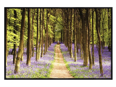 Gloss Black Framed Woodland Path -