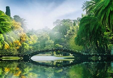 Bridge in the Sunlight - Hidden Paradise