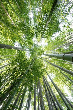 Bamboo - Enchanting Photography