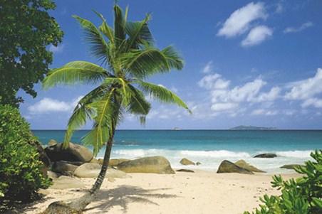 Palm Beach - Tropical Paradise