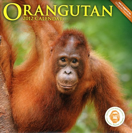 Gentle Giants of the Wild - The Orangutan Foundation